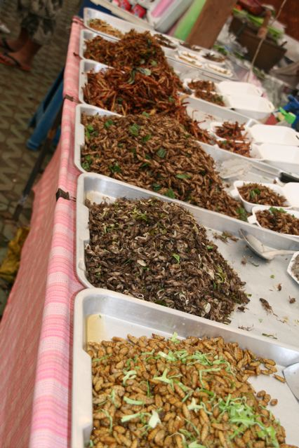 thai insects 3