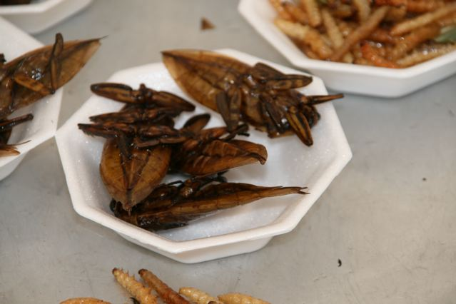 thai insects 4