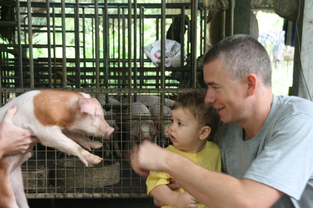 Getting up close and personal at my families pig farm.