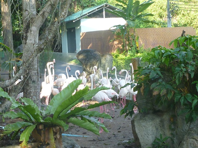 Right near the main gate were the Pink Flamingos.