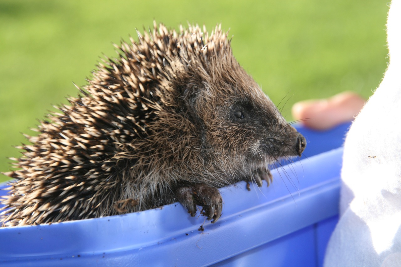 'Hedgy' was very cute and prickly.