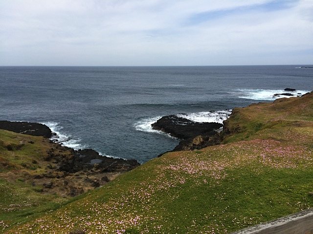 One hour later we were at Phillip Island. We headed to the southern tip to have a walk around and try and find some Fairy Penguins.